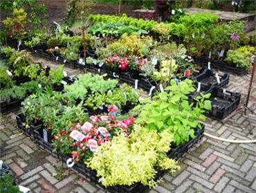 Planten uit eigen kwekerij