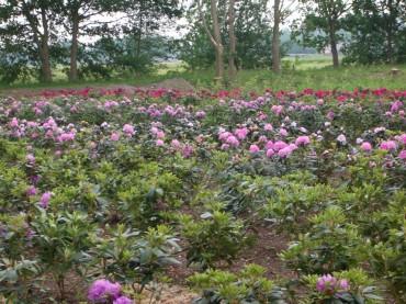Eigen Kwekerij bloemen