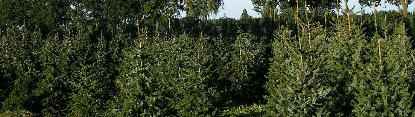 boomkwekerij apeldoorn
